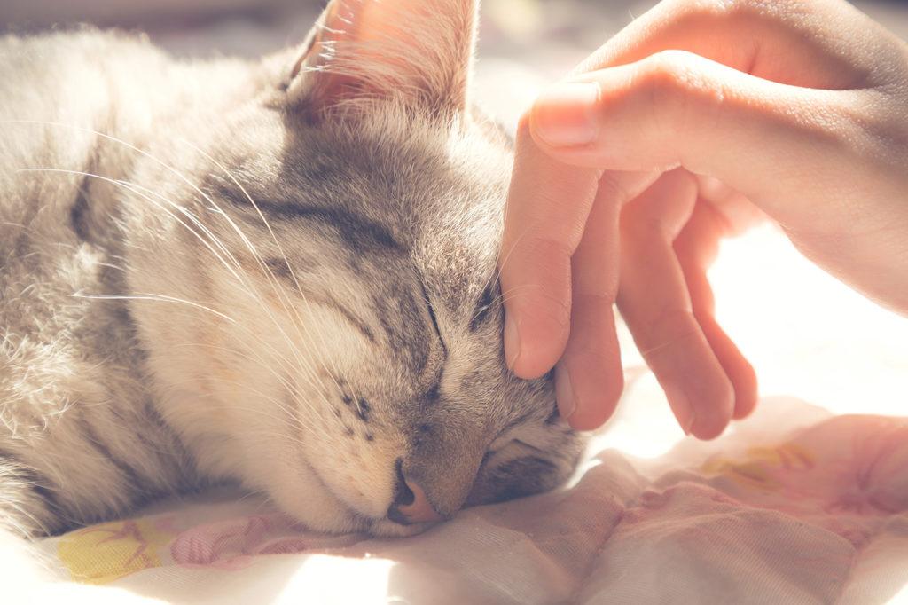 kremacja zwierząt psa kota
