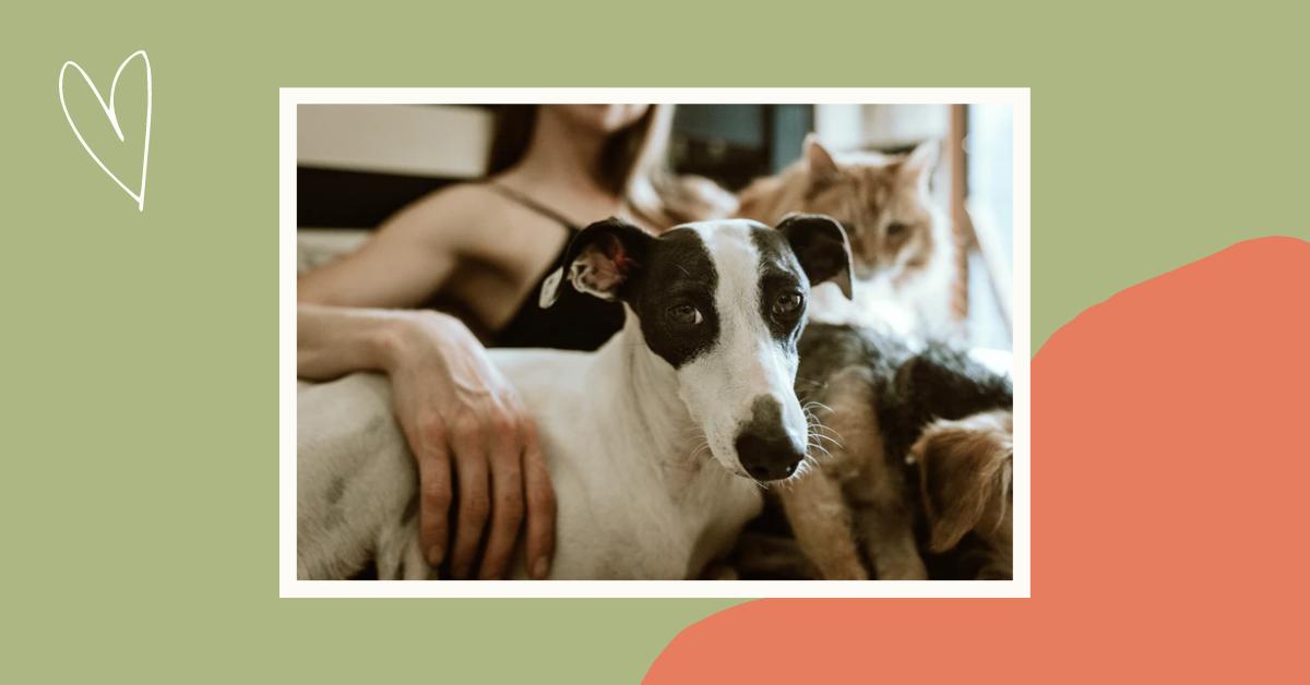 Jak pomóc zwierzęciu, które straciło czworonożnego przyjaciela?